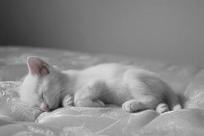 We Heart It Kitten 2